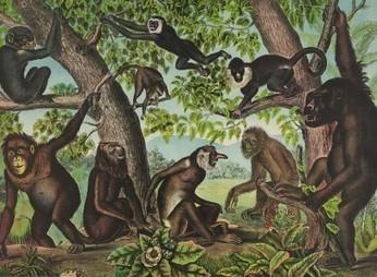 Monkeys All the Way Down - SAPIENS | Views of Evolution | Scoop.it