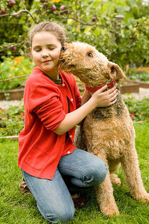 Best Guard Dogs for Families  Airedale Terrier