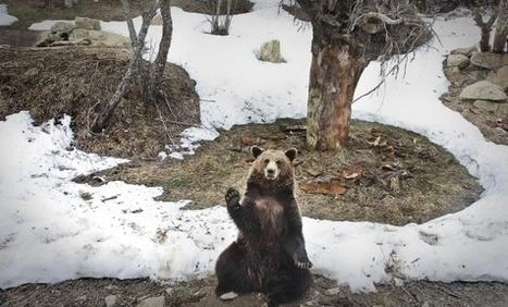El Vall d'Aran estrena un parque zoológico para especies autóctonas | TERCERA EVALUACIÓN NOTICIAS CTM | Scoop.it