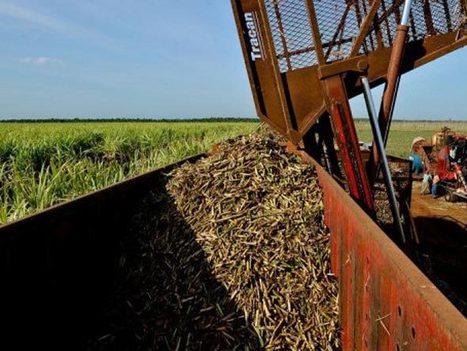 Venda de terras em larga escala agrava insegurança alimentar - EXAME.com | Agronegócio | Scoop.it