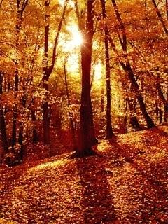 Falling Leaves of Autumn | Awakenings: America & Beyond | Scoop.it