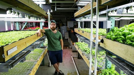 In a Brooklyn aquaponic farm, basil grown with tilapia is the future | Tudo o resto | Scoop.it