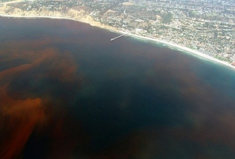 Iron Helps Prevent Formation Of Coastal Dead Zones   Geology   Scoop.it