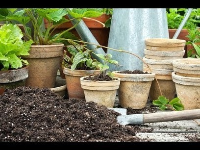 How to Plant in Pots | Planet Natural | Gardening | Scoop.it