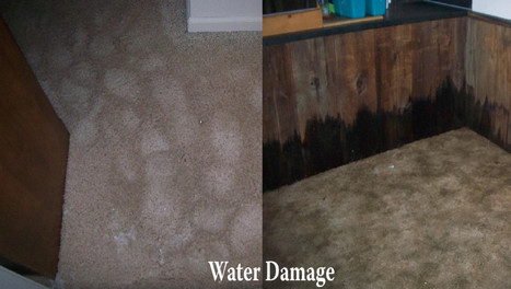 Water Damaged Carpet Cleaning & Wet Carpet Drying Melbourne | Capital Facility Services | Scoop.it