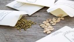 How to get free seeds for your first garden   Graines de Troc - Seeds swaping   Scoop.it