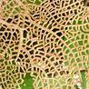 Biomimétisme & Biomimicry