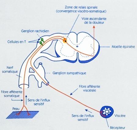 TPE 2009 - Le cheminement de la douleur | Glandes Lacrymales | Scoop.it