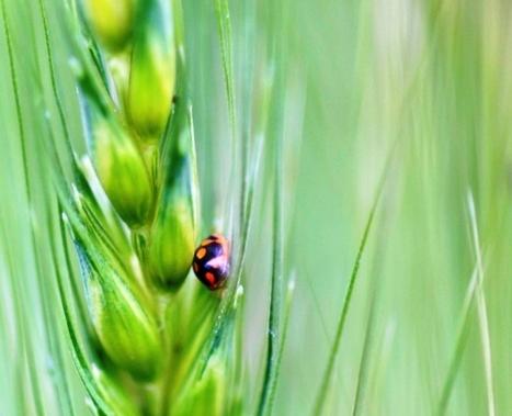 Factores que influyen en el crecimiento del mercado de insumos de control biológico   Protección vegetal   Scoop.it