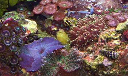 Mantis Shrimp | Mantis Shrimp | Scoop.it