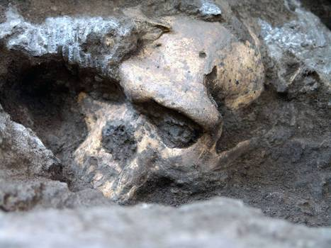 Perfectly preserved 1.8 million-year-old skull 'could re-write history of human evolution' | Ancient History | Scoop.it