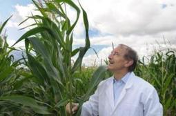 Good parents are predictable, at least when it comes to corn | Food issues | Scoop.it