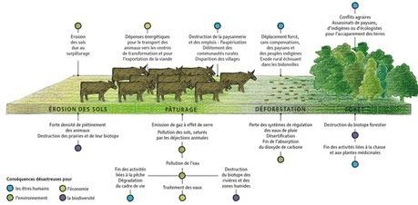 En Amazonie, le bétail mange la forêt, par Agnès Stienne (Le Monde diplomatique) | Géographie : les dernières nouvelles de la toile. | Scoop.it