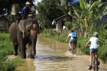 Croiser un éléphant, sur la route, à vélo... | RoBot cyclotourisme | Scoop.it