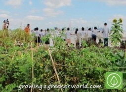 Episode 322: NYC Rooftop Farms   Growing A Greener World   Annie Haven   Haven Brand   Scoop.it