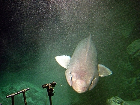 What Is a Sofa Shark? | Motherboard | All about water, the oceans, environmental issues | Scoop.it