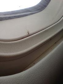 Los virus también van de vacaciones: dengue viaja de polizón en avión desde Bali a Australia   microBIO   Scoop.it