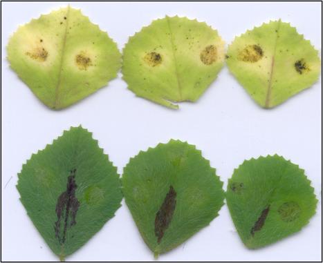 #PlantSciCurators: Christophe Jacquet | Plants and Microbes | Scoop.it
