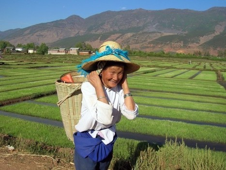 Agriculture en Chine : le mirage industriel | Questions de développement ... | Scoop.it