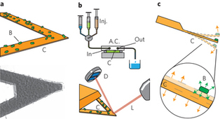 Rapid detection of bacterial resistance to antibiotics using AFM cantilevers as nanomechanical sensors | Mineralogy, Geochemistry, Mineral Surfaces & Nanogeoscience | Scoop.it