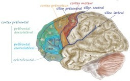 Alcohol Breaks Brain Connections Needed to Process Social Cues   addiction and its treatment   Scoop.it