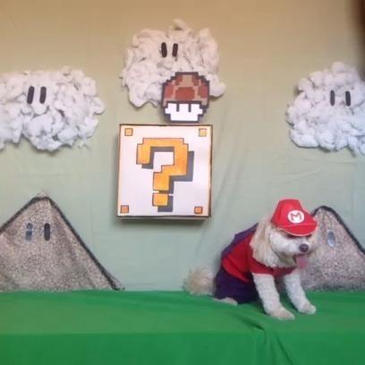 Super Mario Dog | All Geeks | Scoop.it