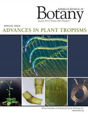 How plants sense gravity -- a new look at the roles of genetics and ... | Plant Gravitropism | Scoop.it