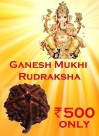 Gauri Shankar Rudraksha - Rudraksha   JAI MADAAN   Scoop.it
