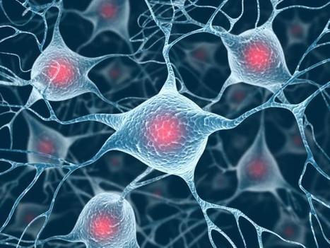 Key to fighting brain disease could lie in boosting appetite of cells | Preventive Medicine | Scoop.it