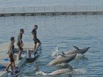 QC court refuses to extend 72-hour order stopping dolphins' re-export to Singapore | Earth Island Institute Philippines | Scoop.it