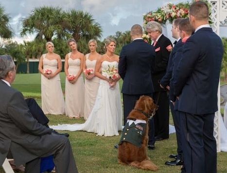 A service dog was the best man at a veteran's wedding, and these 5 photos are the absolute best. | enjoy yourself | Scoop.it