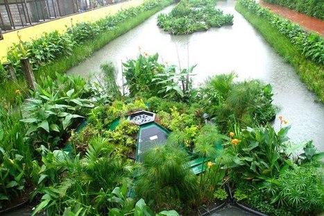 Tratamento recupera rios poluídos e cria jardins flutuantes - EXAME.com | arkhitekton | Scoop.it