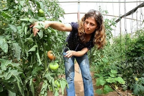 Organic farming in the UAE produces slow and steady path to profit | The National | OrganicNews | Scoop.it