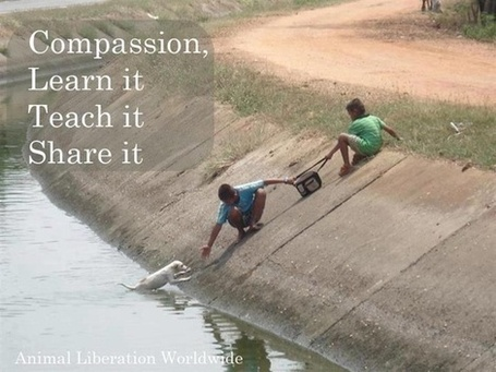 Share the compassion | Quote for Thought | Scoop.it