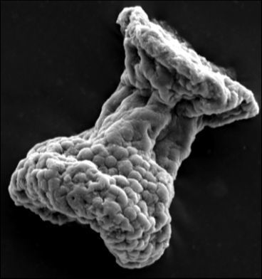 The first hairy microbes: New fossils reveal oldest known ciliates | Biological Evolution | Scoop.it