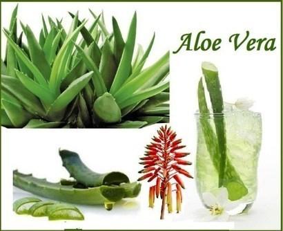 Top 10 Health Benefits of Aloe Vera -Ayurveda & Yoga   Planet Ayurveda   Scoop.it