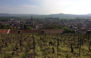 Champagne bureau introduces new environmental standard | Vitabella Wine Daily Gossip | Scoop.it