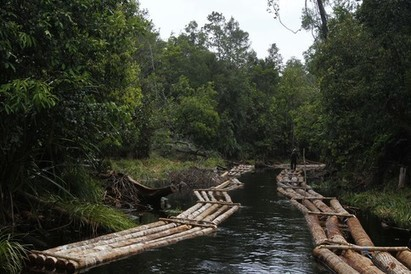 On Indonesia's paper trail: There's just too much illegal wood | Orangutan Land Trust | Scoop.it