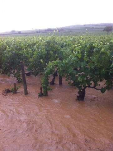Cote de Beaune vineyards hit hard by violent storms | Vitabella Wine Daily Gossip | Scoop.it
