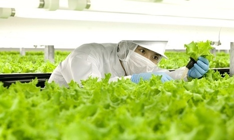 Une ferme japonaise aux mains des robots | Post-Sapiens, les êtres technologiques | Scoop.it
