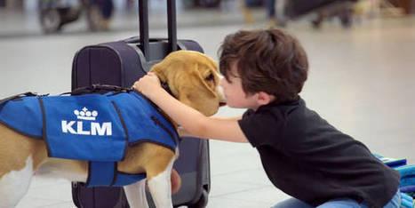 """Le nouvel """"employé"""" de KLM est vraiment très mignon   Beagle   Scoop.it"""
