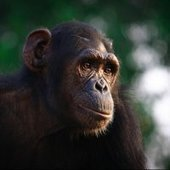 Animals with Bigger Brains Have More Self-Control | Cultural Scapes of Knowledge | Scoop.it