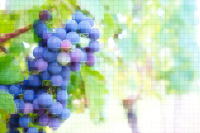 Le vin suisse vit sa transformation digitale | e-Vin & e-Wine | Scoop.it