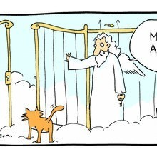 How cats ended up with 9 lives | NYC's Animals | Scoop.it