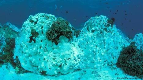 'The future is grim for coral reefs' | Environment | DW.COM | 18.08.2015 | Coral reef ecosystems resilience | Scoop.it