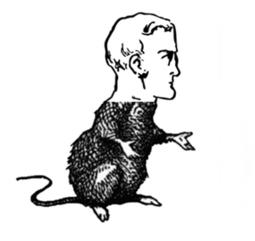 Pour la Science - Actualité - Des souris au cerveau humain? | Neuroéducation | Scoop.it