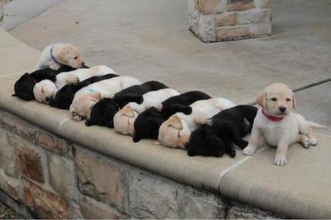 Tweet from @Distractify | Dog Lovers | Scoop.it