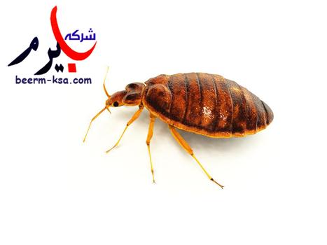 شركة مكافحة حشرات   شركة بيرم 0549800078   beerm-ksa   Scoop.it