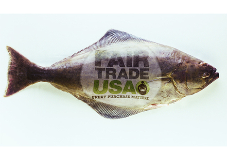 Will the Fish Industry Give Fair Trade a Fair Shot? | World Geography: Fishing | Scoop.it