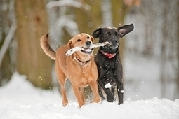 Cold Weather Tips   Pets   Scoop.it